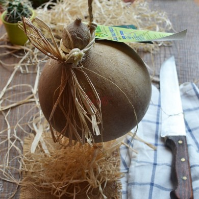 Caciocavallo podolico cheese